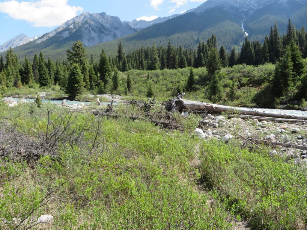 Hikes in Jasper en Banff: Johnston Canyon en de Ink Pots 3