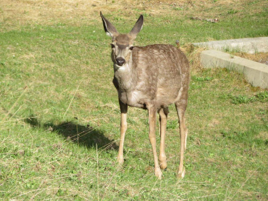 Wildlife spotten in Jasper National Park