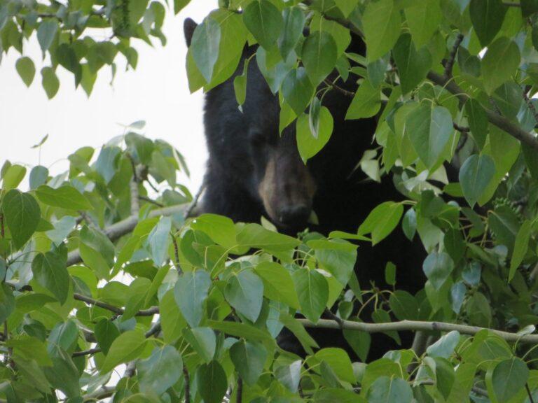 13 activiteiten in Jasper National Park Canada
