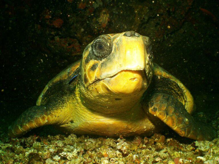 Leren duiken: de wereld onder water ontdekken