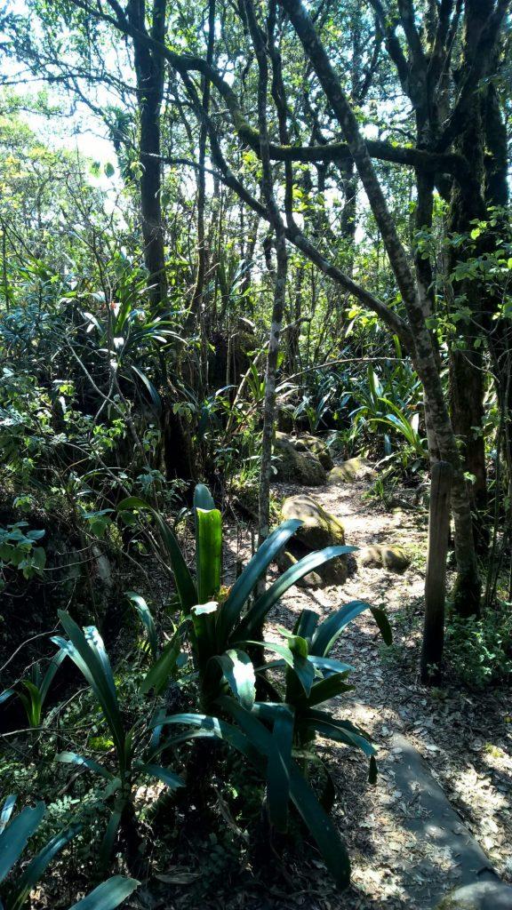 God's Window | Rainforest