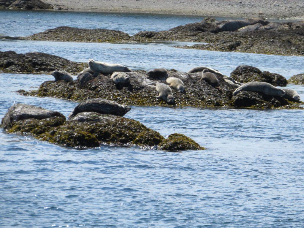 Walvissentour | Victoria BC | zeehonden