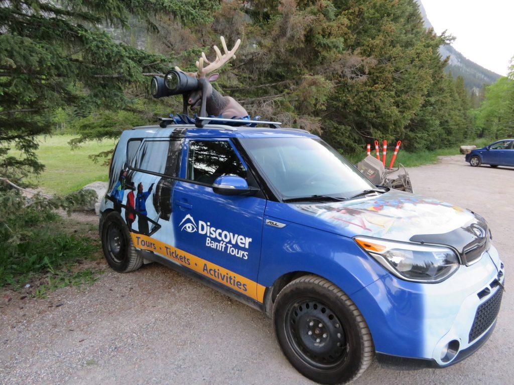 Evening Wildlife Safari | Discover Banff Tours