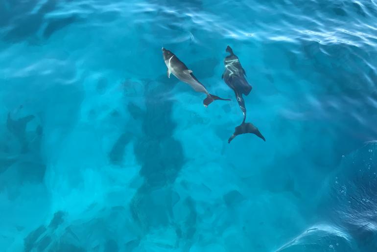 Duiken in El Gouna | Dolphin's house | Dolfijnen