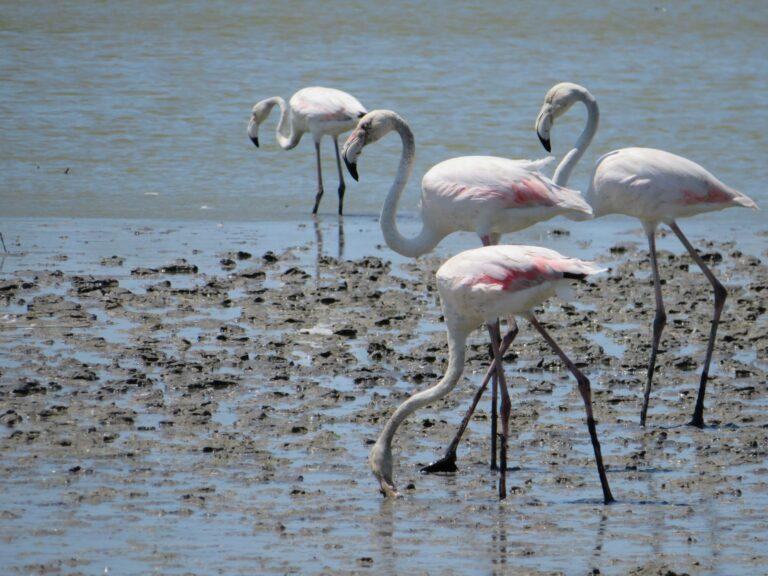 6 leuke dagtrips in de omgeving van Arles | Camargue | Flamingo's