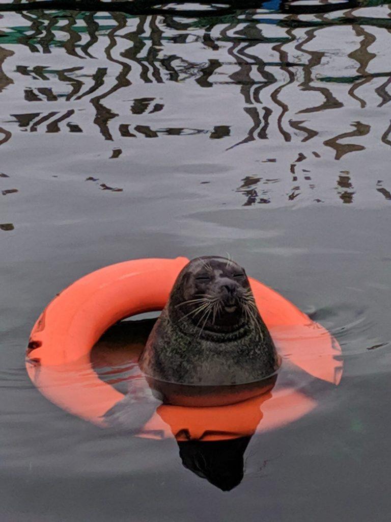 Zeehond bij Neeltje Jans | Oosterscheldekering | Zeeland