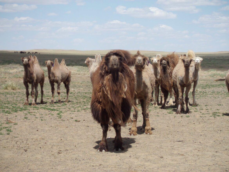 Bucketlist avontuur | Rondreis Mongolië: een week roadtrippen door de Gobi woestijn