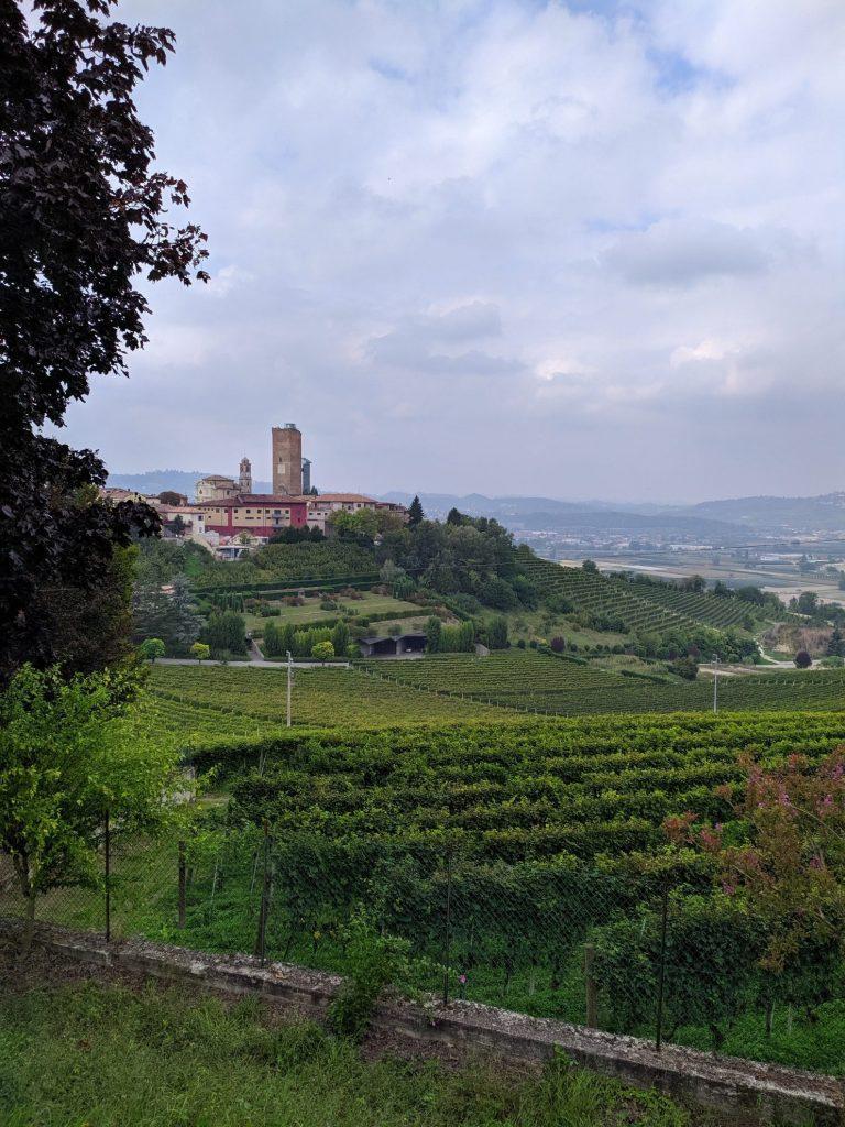 De wijngaarden bij Barbaresco | Piemonte Italië