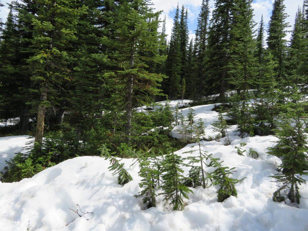 Sneeuw bij Peyto Lake | Banff National Park | Camperreis West-Canada