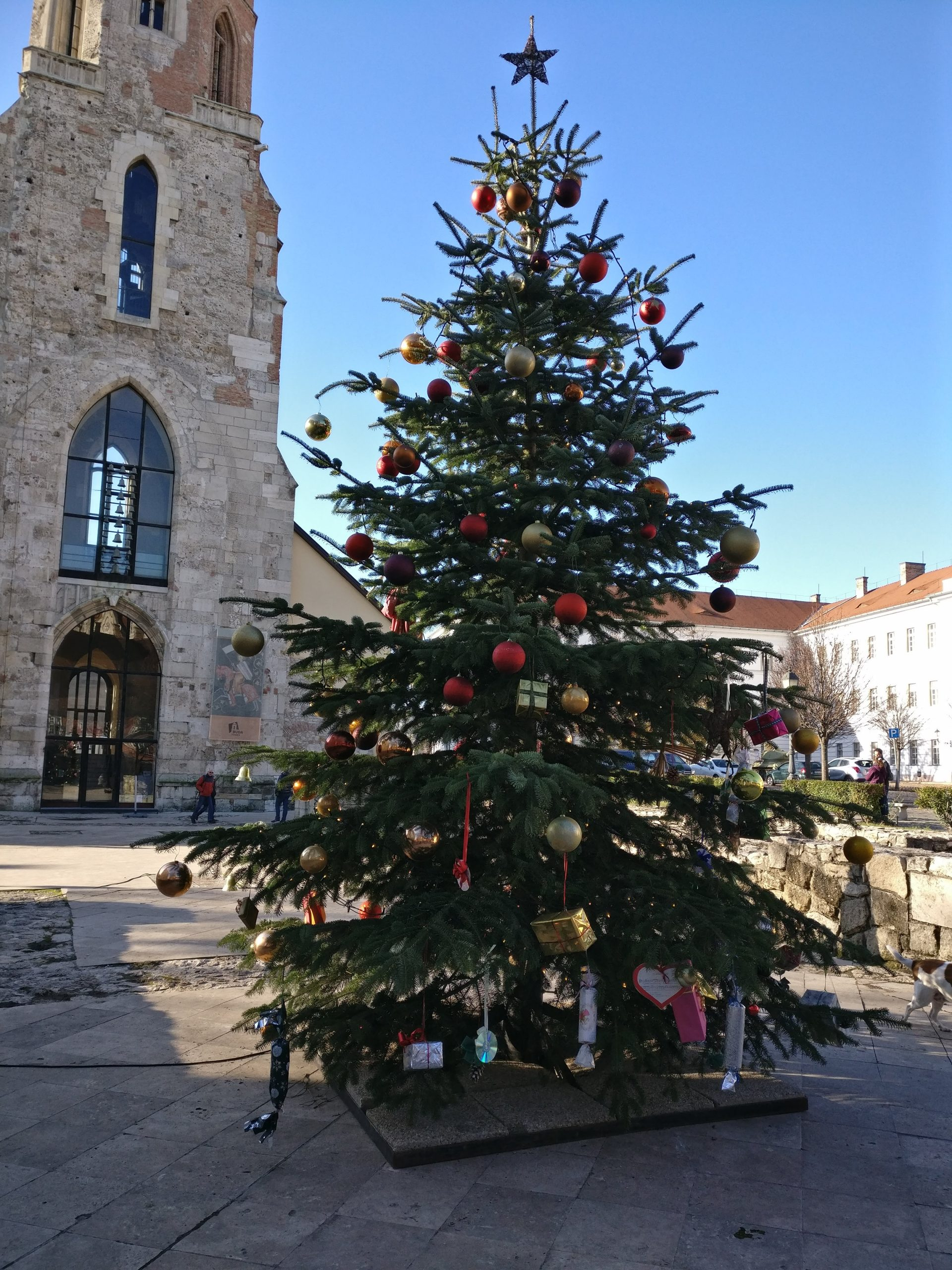 Kerstboom bij de Magdalena Kerk | Burchtheuvel | Boedapest