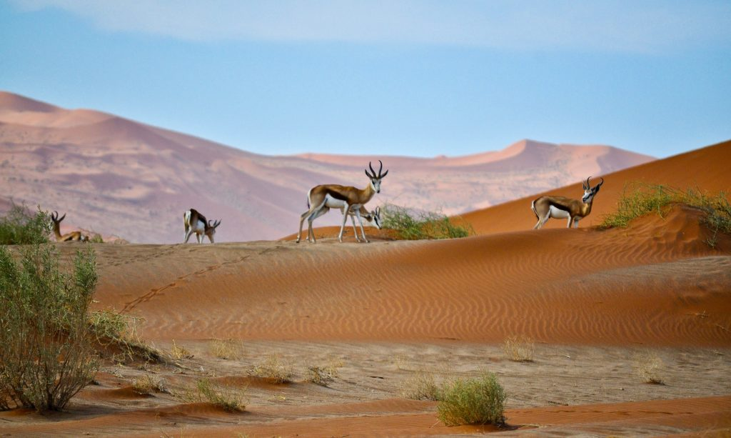 Namibië | Top 10 voor dit decennium