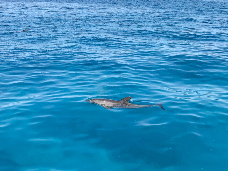 Geluksmoment: Dolfijnen spotten vanuit El Gouna Egypte
