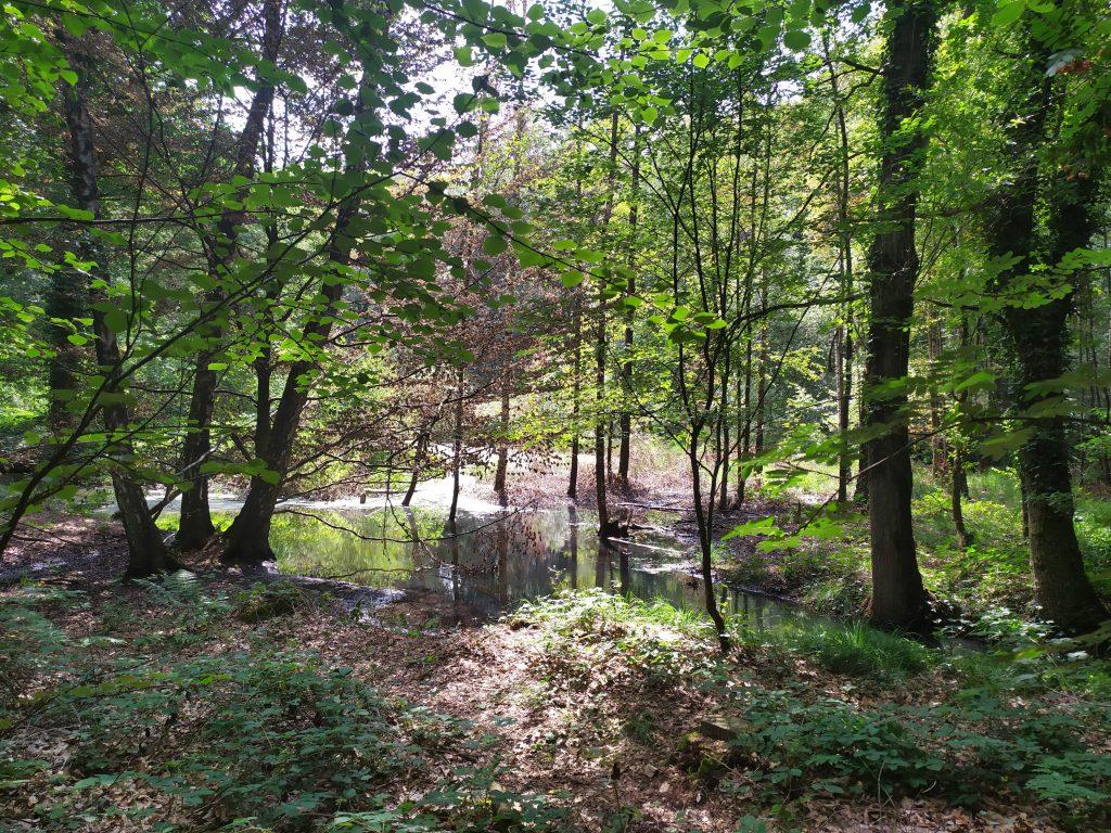 Landgoed Geijsteren | wandelen in Noord Limburg