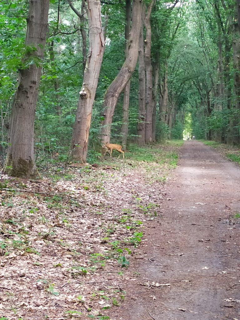 Landgoed Geijsteren | wandelen in Noord Limburg | ree