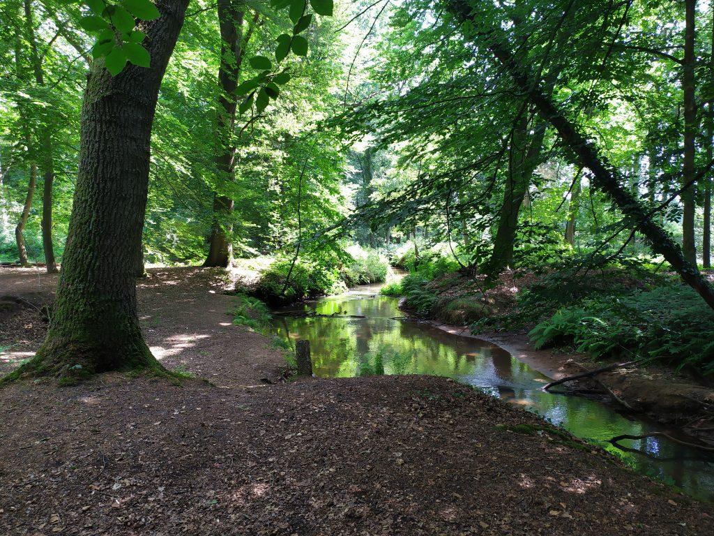 Landgoed Geijsteren   wandelen in Noord Limburg   moeras