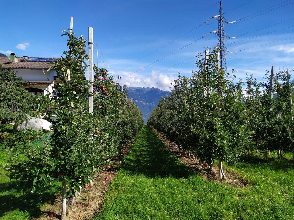 Appelboeren   Apfel   Zuid Tirol   Südtirol  