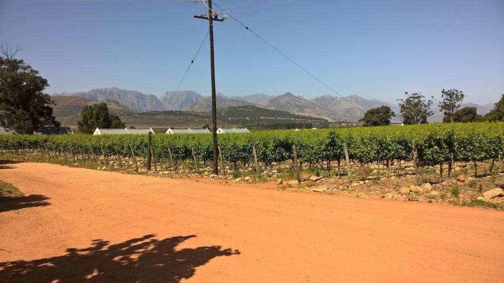 De wijngaarden in Franschhoek | Zuid Afrika