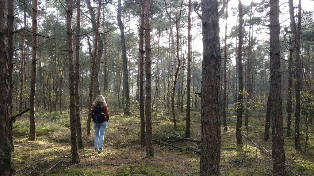 Wandelen in de bossen bij Beerze