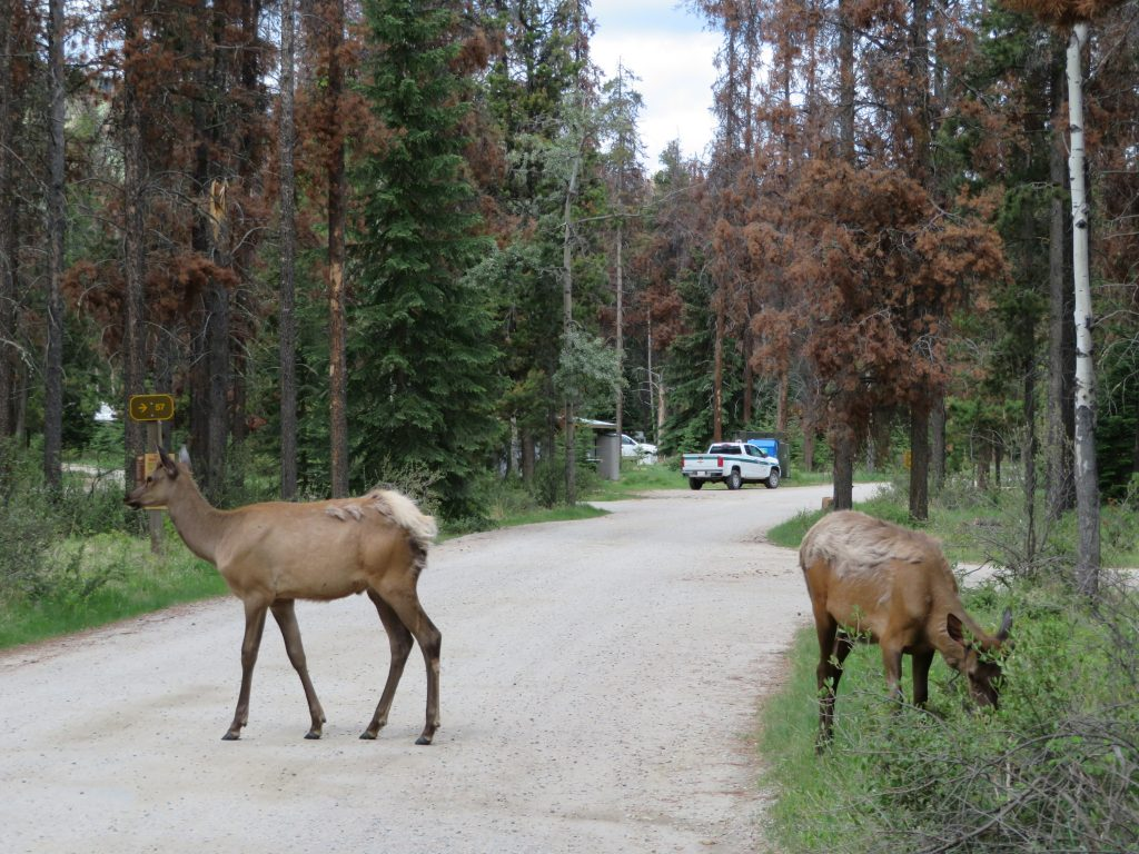 Whistlers Campground | Jasper National Park | West Canada