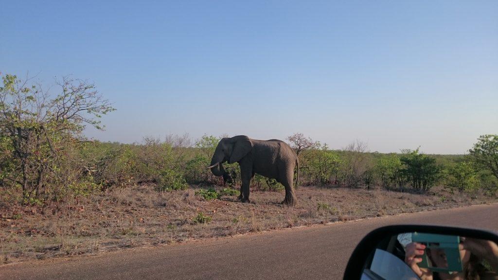 Olifanten in het wild spotten in Zuid Afrika