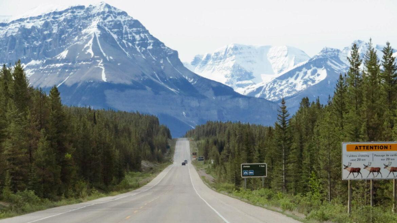 Hoogtepunten Icefields Parkway   Jasper National Park