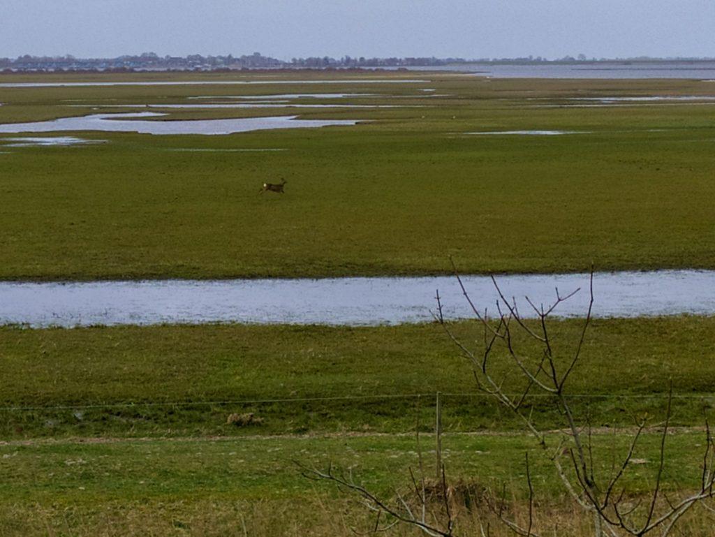 Lauwersmeer wandelen | Observatietoren