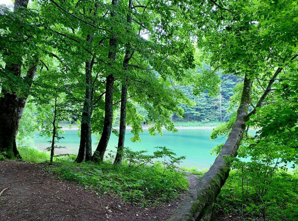 Bijzondere bestemmingen in Europa buiten de gebaande paden | Biogradsko Jezero Montenegro | Lake Biograd